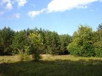 Поляна на месте бывшей усадьбы Гагариных